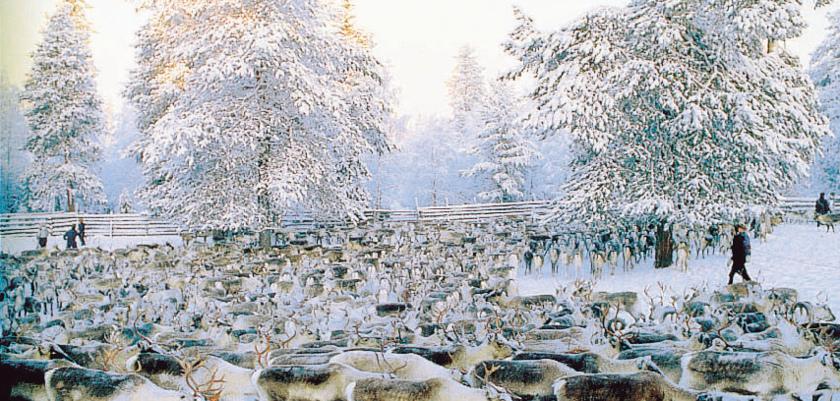finland_lapland_reindeer-farm.jpg